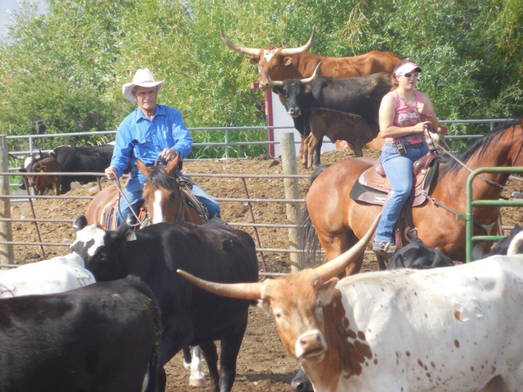 Cattle clinic at the Akhursts.